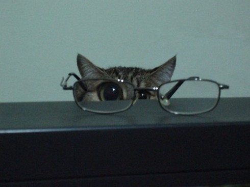 kittyglasses
